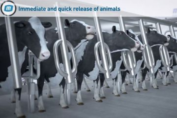 MP Armektron Superb - Cows milking system